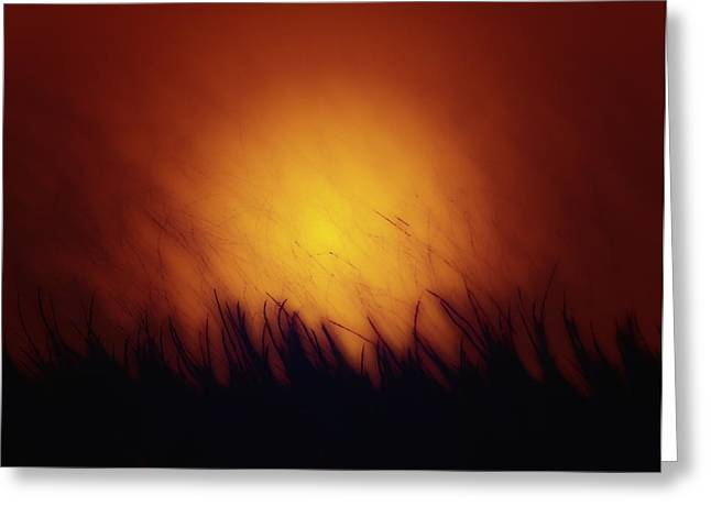 Barry Styles Greeting Cards - Lost in the Light Greeting Card by Barry Styles