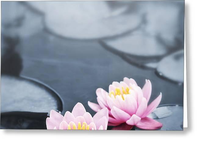 Lotus blossoms Greeting Card by Elena Elisseeva