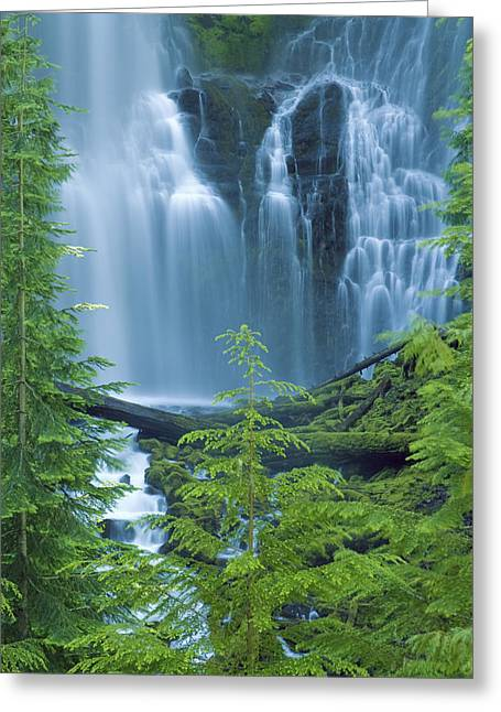 Amazing Greeting Cards - Lower Proxy Falls Greeting Card by Greg Vaughn - Printscapes