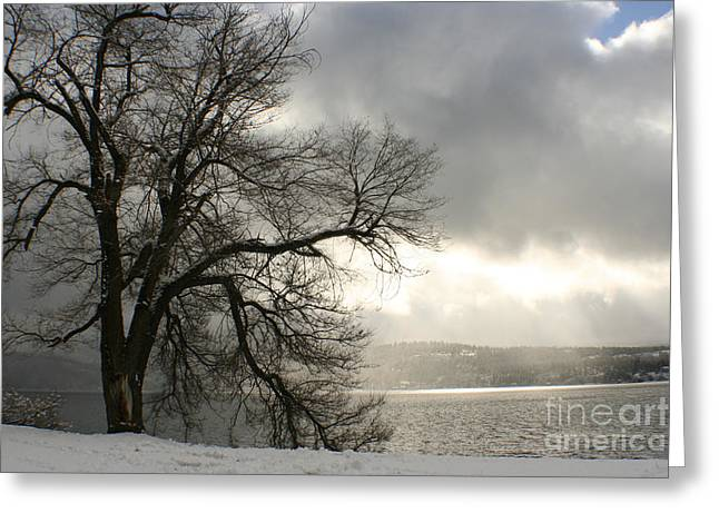 Luminescence Greeting Cards - Luminescence Greeting Card by Idaho Scenic Images Linda Lantzy