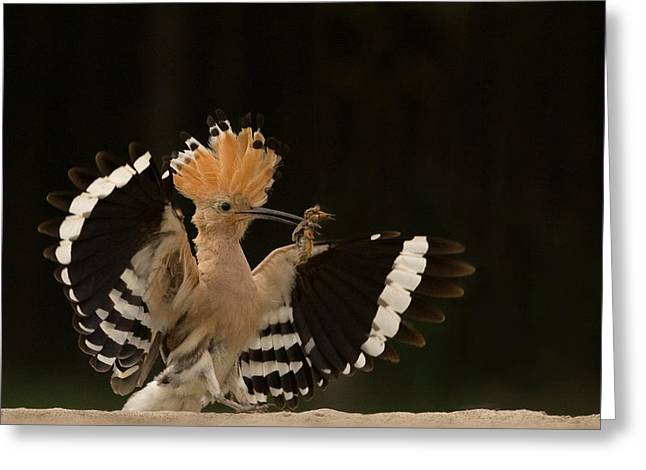 Avian Greeting Cards - Lunch Is Ready Greeting Card by Giulio Zanni