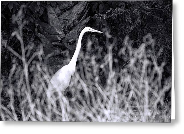 Hunting Bird Greeting Cards - Lying In Wait Greeting Card by Ed Waldrop