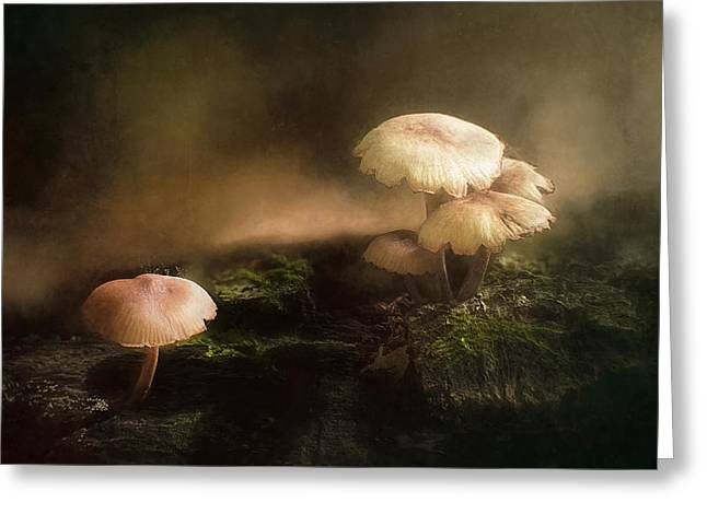 Spore Greeting Cards - Magic Mushrooms Greeting Card by Scott Norris