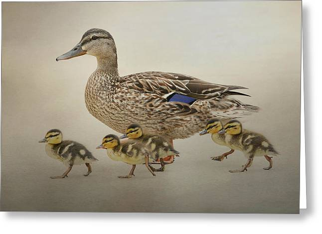 Baby Mallards Greeting Cards - March Of The Ducklings Greeting Card by Fraida Gutovich
