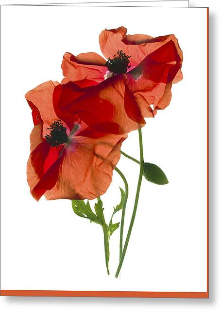 Margie's Poppy Duo Greeting Card by Julia McLemore