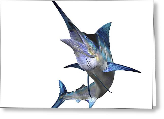 Blue Marlin.white Marlin Greeting Cards - Marlin Greeting Card by Corey Ford