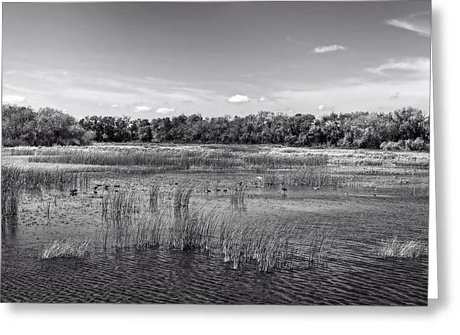 Lanscape Greeting Cards - Marsh - Santa Ana National Wildlife Refuge Greeting Card by Mountain Dreams