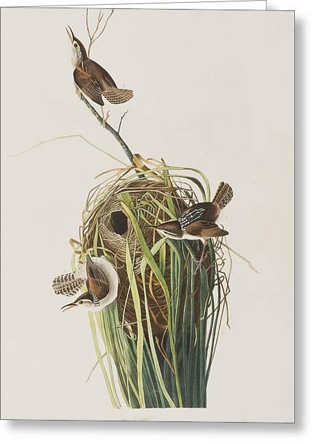 Nest Greeting Cards - Marsh Wren  Greeting Card by John James Audubon
