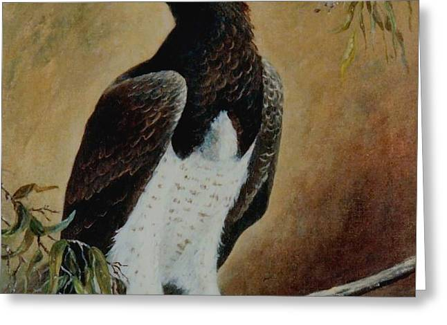 Martial Eagle Greeting Cards - Martial Eagle Greeting Card by Rita Palm