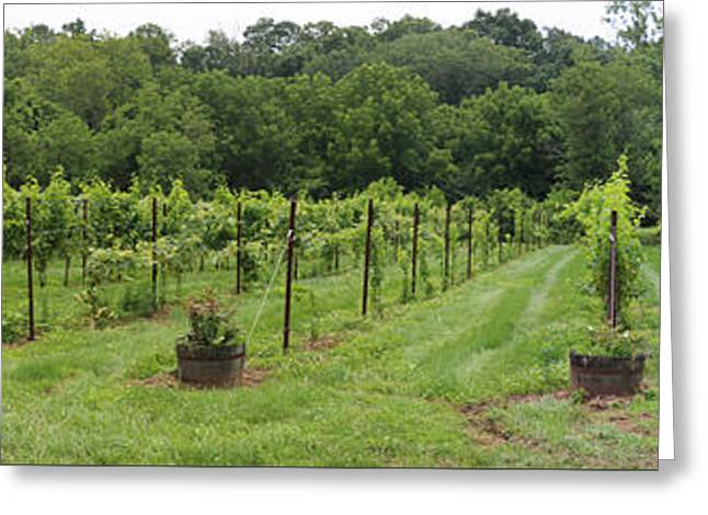 Maryland Vineyard Panorama Greeting Card by Thomas Marchessault