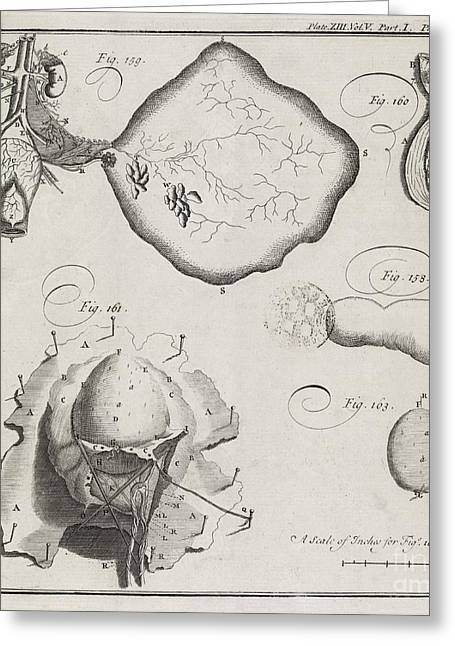 Philosophical Transactions Greeting Cards - Medical Illustrations, 18th Century Greeting Card by Middle Temple Library