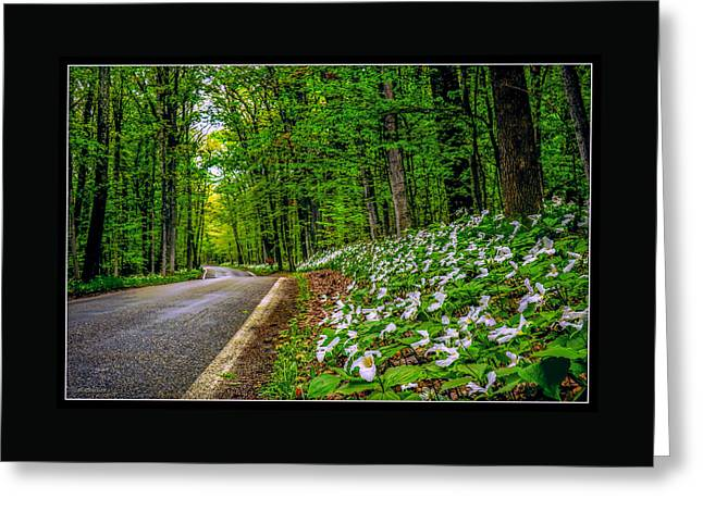 Mystical Landscape Greeting Cards - Mi Tunnel of trees Greeting Card by LeeAnn McLaneGoetz McLaneGoetzStudioLLCcom