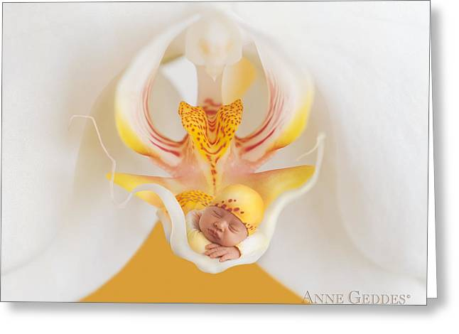 Orchids Greeting Cards - Mia in Moth Orchid Greeting Card by Anne Geddes