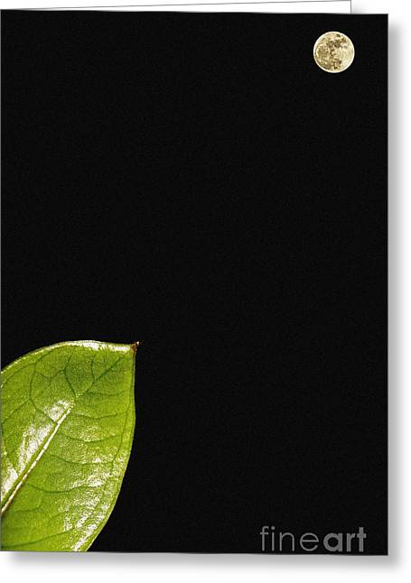 Micro And Macro Greeting Card by Celestial Images