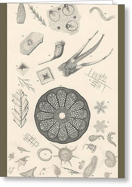 Structure Drawings Greeting Cards - Microscopic Objects Greeting Card by Captn Brown