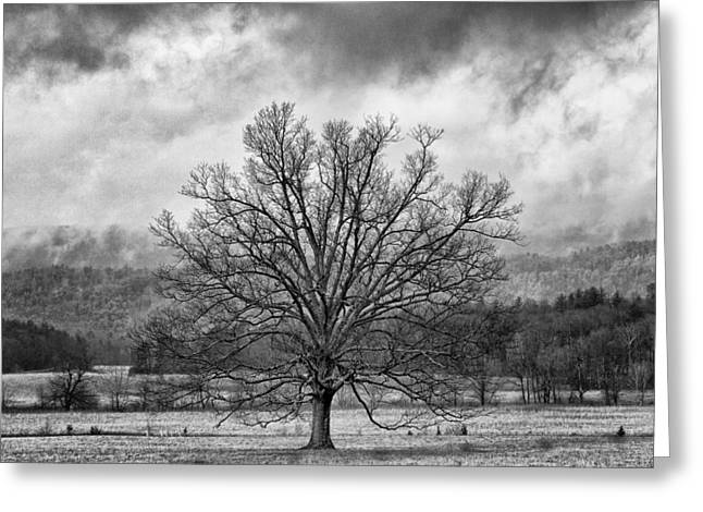 Winter Storm Greeting Cards - Mighty Greeting Card by Todd McPhetridge