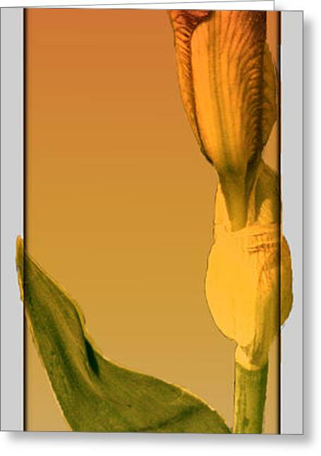 Bold Style Greeting Cards - Mix And Match Bud  Greeting Card by Debra     Vatalaro