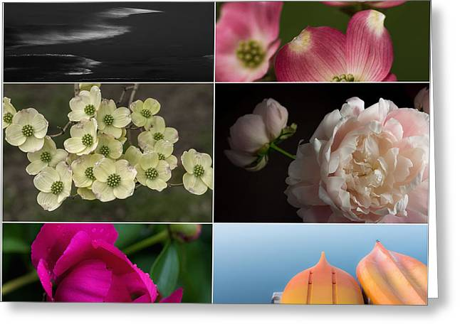 Zinnias Greeting Cards - Moments in Time  Greeting Card by Don Spenner