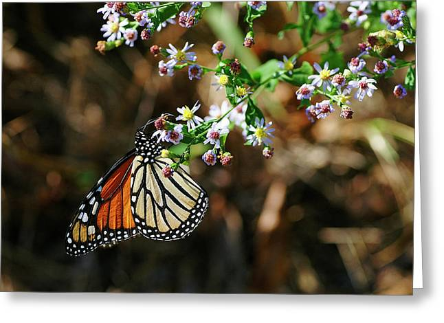 Monarch Greeting Card by Bill Morgenstern
