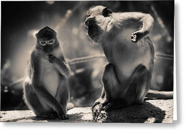 Zoology Greeting Cards - Monkeys Greeting Card by FL collection