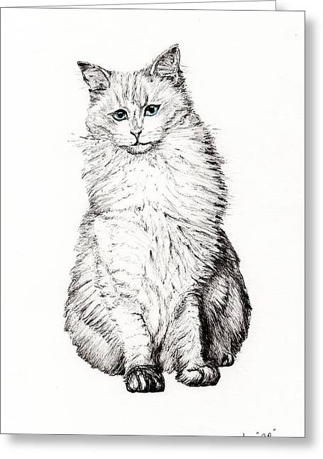 Kitten Prints Greeting Cards - Monty Greeting Card by Vincent Alexander Booth