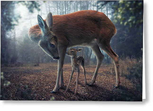 Mother And Fawn Greeting Card by John Wilhelm