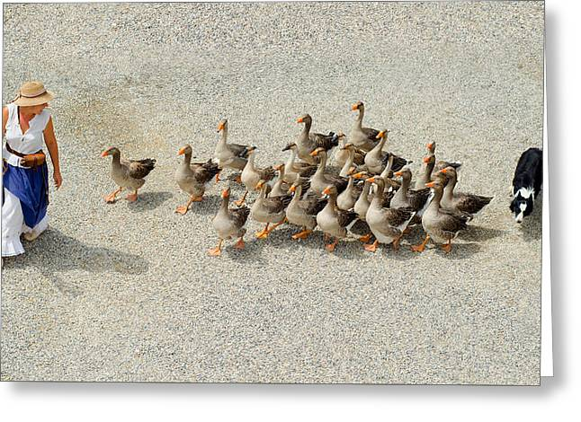 Mother Goose Greeting Cards - Mother Goose Greeting Card by Skitterphoto