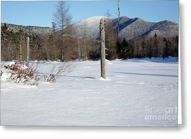 Mount Carrigain - White Mountains New Hampshire Usa Greeting Card by Erin Paul Donovan