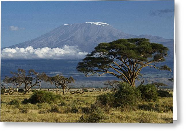 Kenya Greeting Cards - Mount Kilimanjaro Greeting Card by Michele Burgess