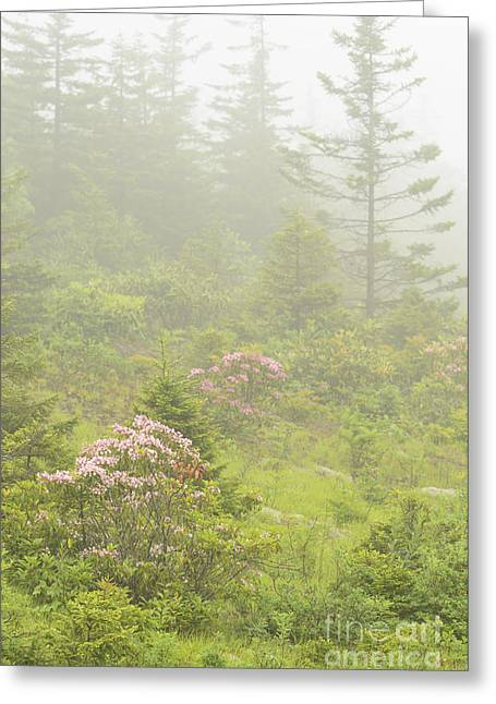 Woodland Scenes Greeting Cards - Mountain Laurel in Mist Greeting Card by Thomas R Fletcher