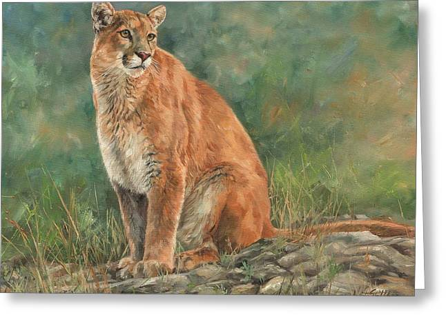 Mountain Lion Greeting Card by David Stribbling