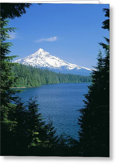Amazing Greeting Cards - Mt. Hood National Forest Greeting Card by Greg Vaughn - Printscapes