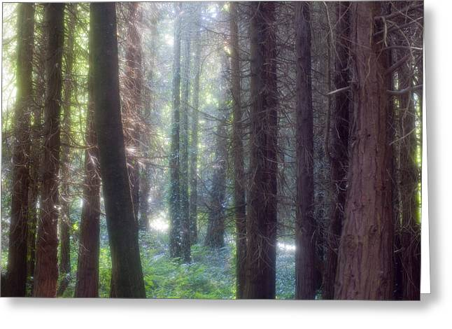 Mystical Landscape Greeting Cards - Mystical Forest Greeting Card by Andre Goncalves