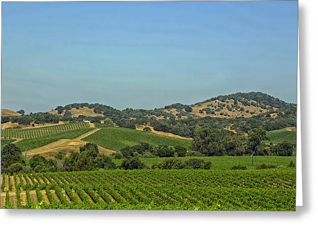 Napa Valley Vineyard Greeting Cards - Napa Valley Vineyards Greeting Card by Mountain Dreams