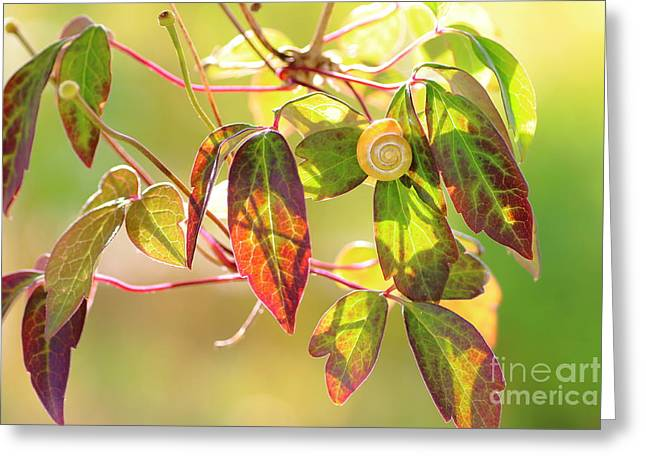 Close Focus Nature Scene Greeting Cards - Nature symbol with Snail on Clematis Greeting Card by Gregory DUBUS