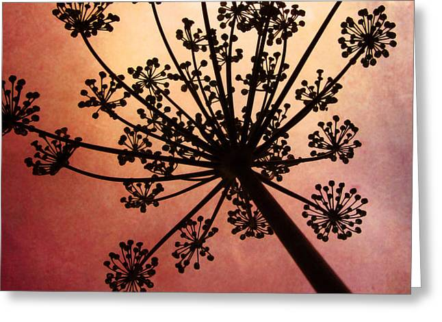 Nature's Fireworks Greeting Card by Amy Tyler