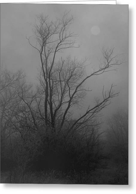 Haze Greeting Cards - Nebelbild 13 - Fog Image 13 Greeting Card by Mimulux patricia no