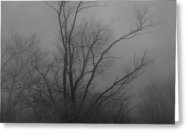 Nebelbild 13 - Fog Image 13 Greeting Card by Mimulux patricia no
