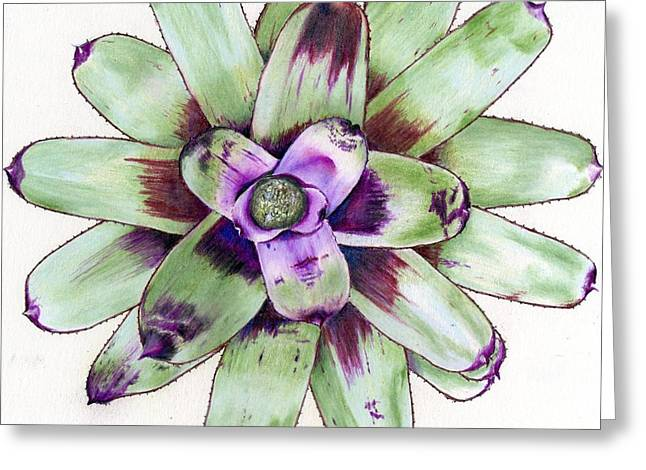 Neoregelia Paintings Greeting Cards - Neoregelia Painted Delight Greeting Card by Penrith Goff