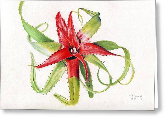 Bromeliad Neoregelia Greeting Cards - Neoregelia pendula Greeting Card by Penrith Goff