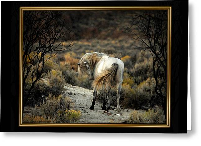 The Horse Greeting Cards - Night Inspection Greeting Card by Marilyn Gregory