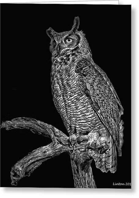 Horne Greeting Cards - Night Owl Greeting Card by Larry Linton