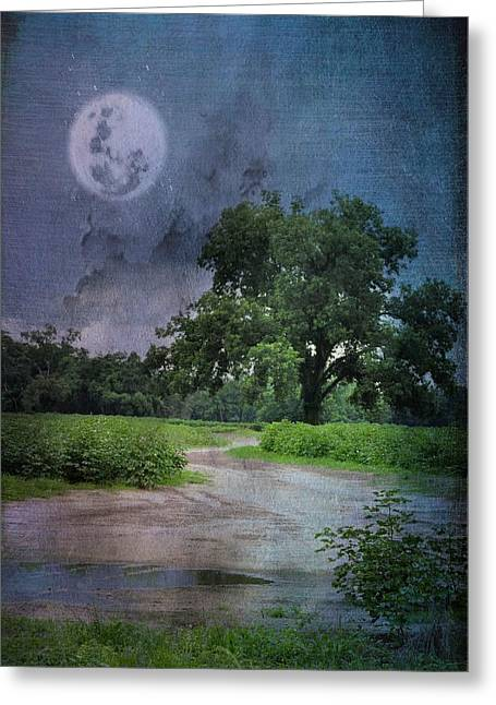 Georgia Cotton Fields Greeting Cards - Night Walk Greeting Card by Jan Amiss Photography