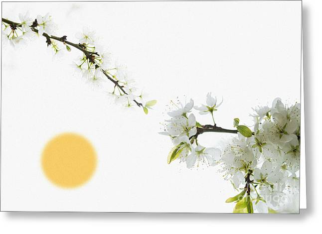 Apricot Greeting Cards - No Winter Lasts forever Greeting Card by Celestial Images