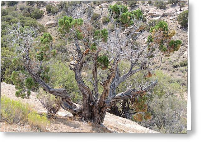 The Hills Greeting Cards - Old Desert Tree Greeting Card by Andrew Chambers