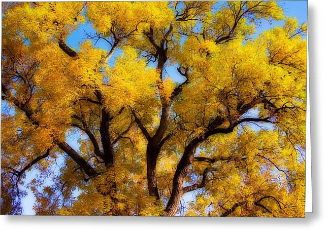 Old Giant  Autumn Cottonwood Orton Greeting Card by James BO  Insogna