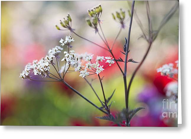 Border Photographs Greeting Cards - One Spring Morning Greeting Card by Tim Gainey