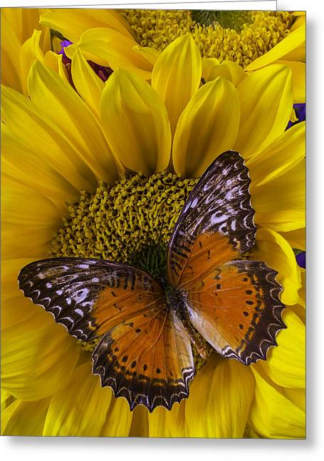 Orange Butterfly On Sunflower Greeting Card by Garry Gay