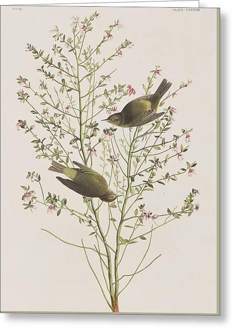 Pairs Greeting Cards - Orange Crowned Warbler Greeting Card by John James Audubon