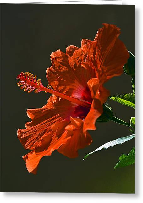 Passiflora Digital Art Greeting Cards - Orange Hibiscus. Greeting Card by Andy Za